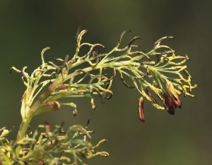 a flower3