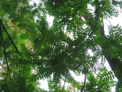 IMG_8659 Tree of H