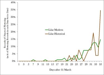 lilacs modern historical