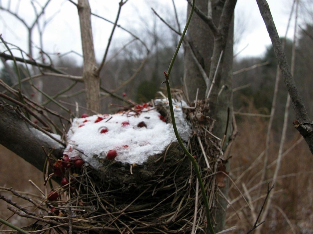 nest with rose hips