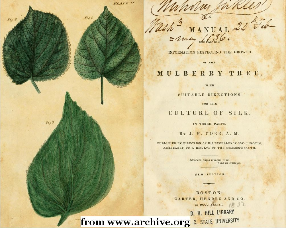 old mulberry book