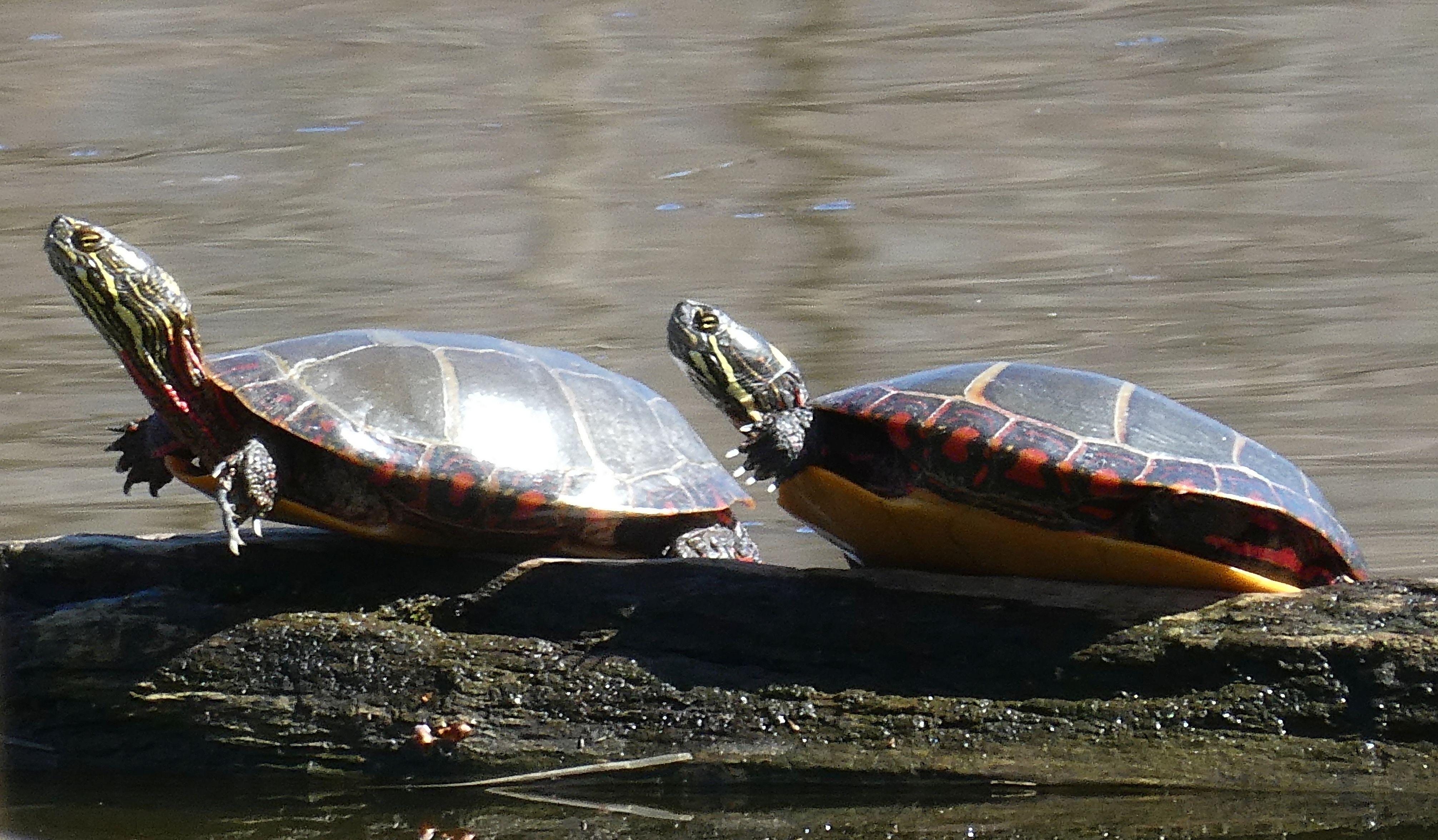 11 turtles 2