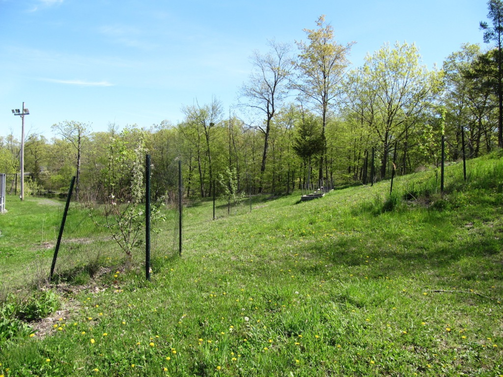 small fruit trees with protective fencing on grassy slope
