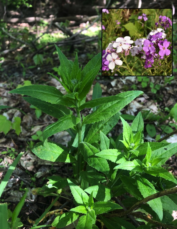 green plant with insect image of purple and pink flowers